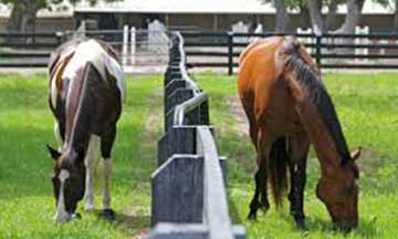 Moss Creek Plantation Equestrian Center